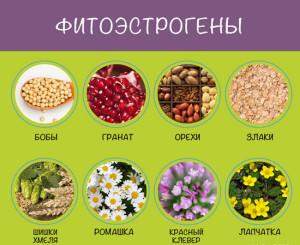 phytoestrogens 300x245 Мифы о заместительной гормональной терапии